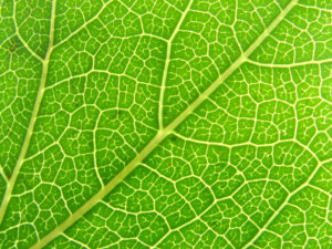 Close up to a green leaf texture