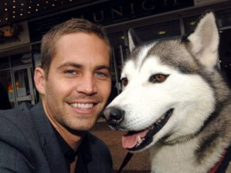 paul walker dog