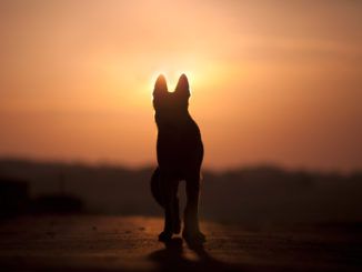 pet loss grief death of dog or cat chicago